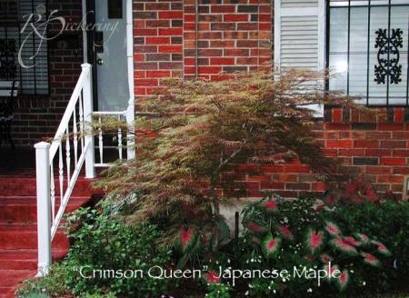 crimson_queen